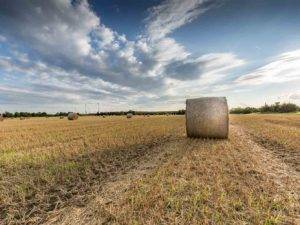 Bild 0034 | Feld mit Strohballen