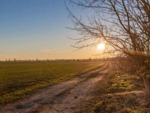 Bild 0036 | Sonnenuntergang am Feld