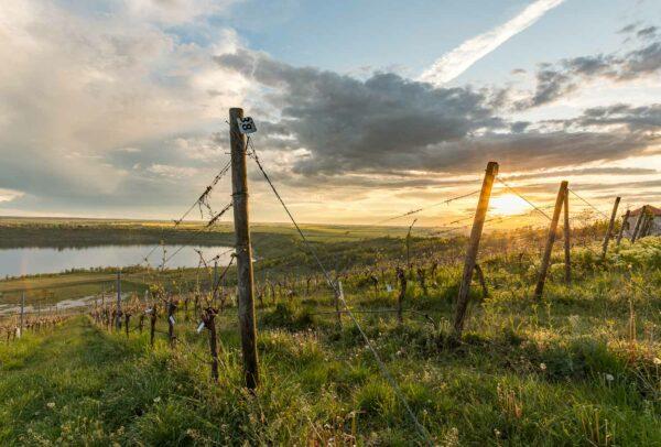 Bild 008 | Sonnenuntergang am Weinberg