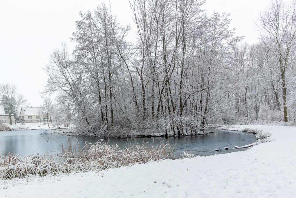 verschneite Bäume am Mühlteich