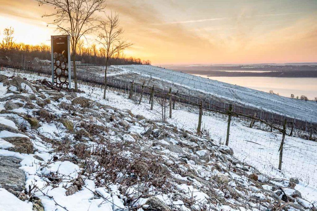 Sonnenaufgang auf dem Weinberg